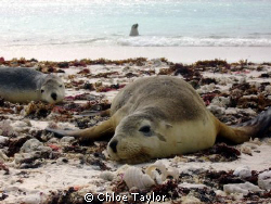 These seals were happy to have us around and played with